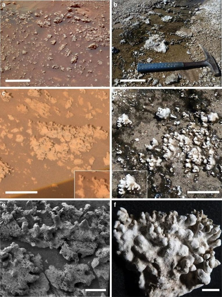 microbial life missed on mars?